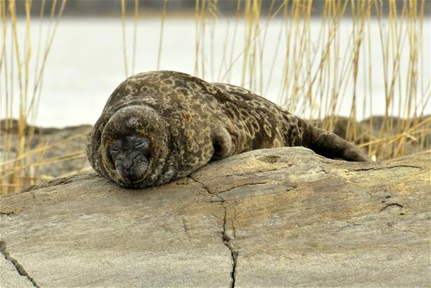 Seal safaris -small groups in May 2019